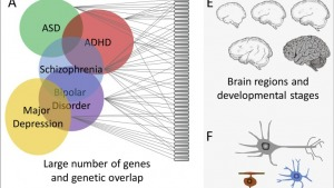 Convergence and Divergence in the Genetics of Psychiatric Disorders