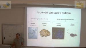 How do we study autism